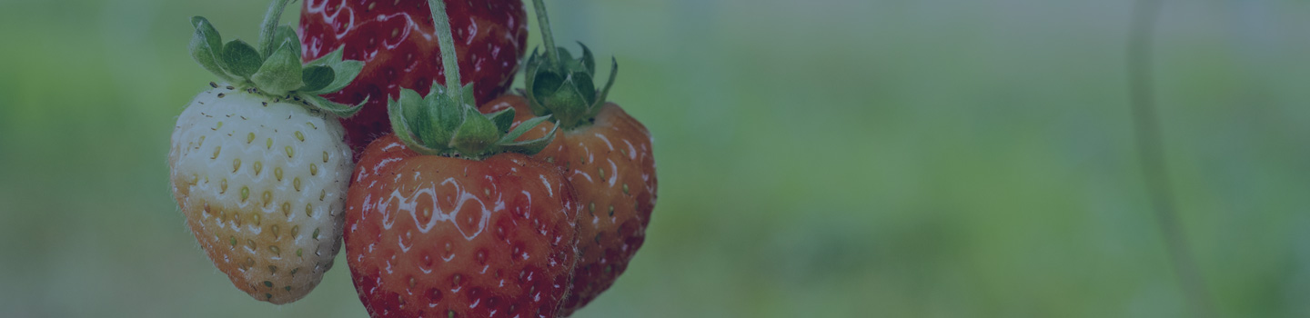 Consumer Products Farms Banner